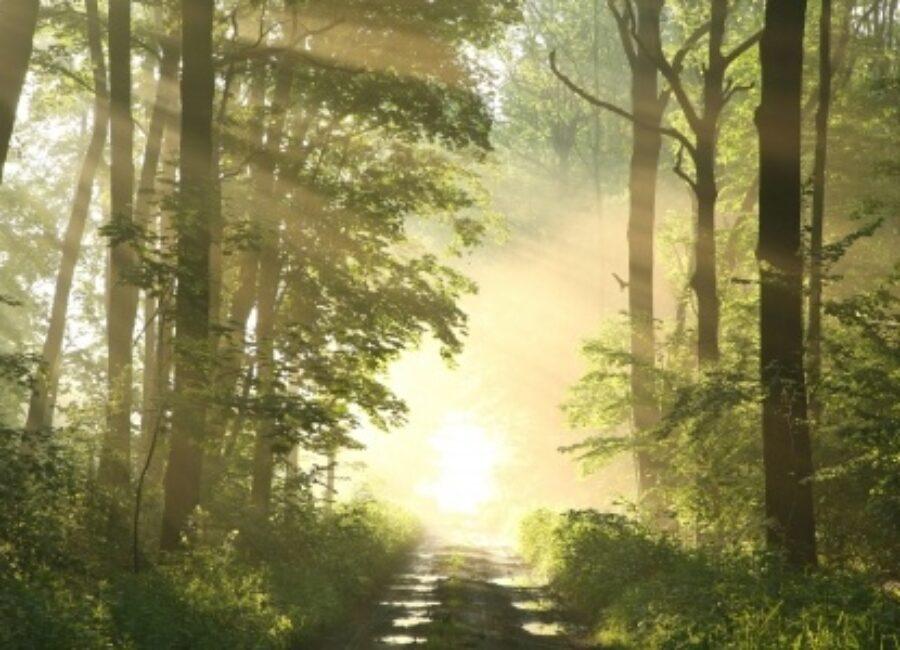 6 étapes sur le Chemin de la Sagesse